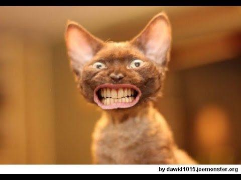 #11 Spróbuj obejrzeć bez śmiania się! Śmieszne koty! – Umrzesz ze śmiechu! [Śmieszne filmiki 2018]