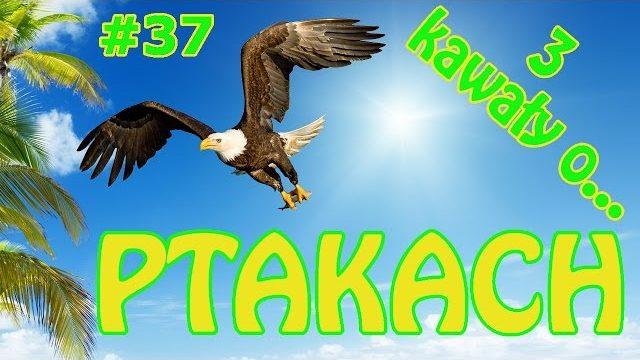 3 Kawały o… Ptakach – Papuga Yogi #37 – Marcin Sznapka