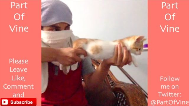 Funny Cats 2015 – Vine Compilation – BEST VINES ✔️