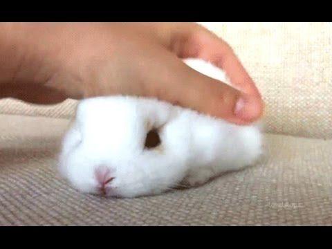 Królik – śmieszne i słodkie filmy króliczek. Kompilacja   Nowy, HD