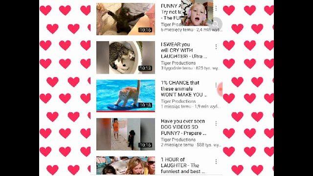 Oglądam śmieszne filmiki o kotach ???