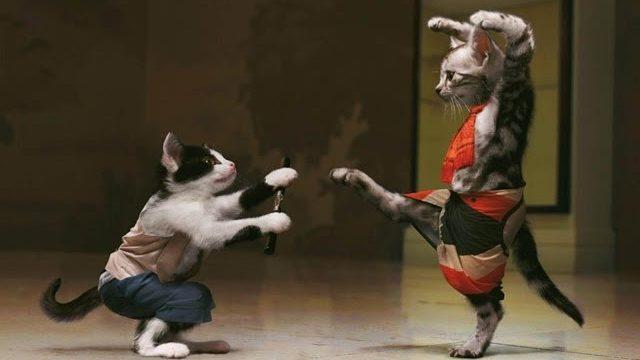 Śmieszne koty [#10]