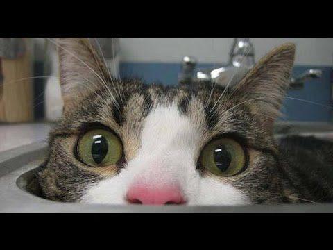 Śmieszne Koty ? #5 2016 funny cat