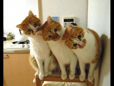 Śmieszne koty [#9]