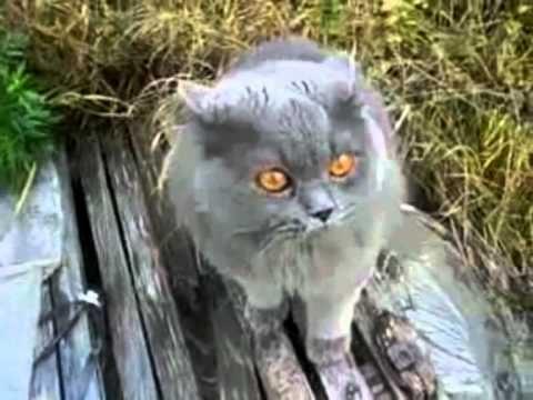 Śmieszne Koty czyli Kocie Figle cz.1