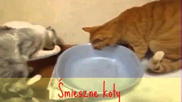 Śmieszne koty/Funny, crazy cats #1. 2016