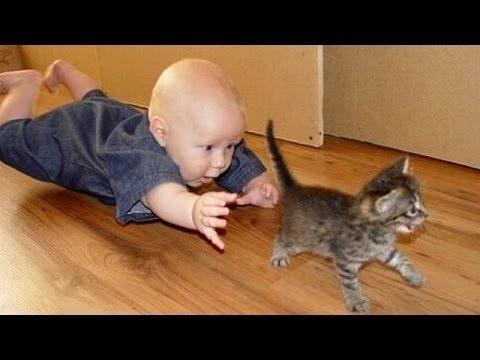 Śmieszne Koty I Dzieci Grają Razem – Cute Cat