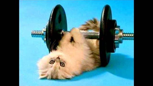 Śmieszne koty i kociaki :)