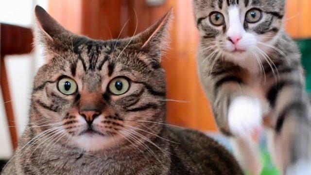 Śmieszne Koty – Prosto z Polski (The Best of Bobo & Nikita Cats)