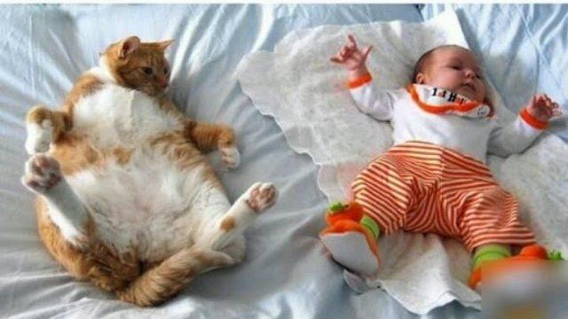 Śmieszne koty VS Dzieci 2016 ? Funny cat vs Babe