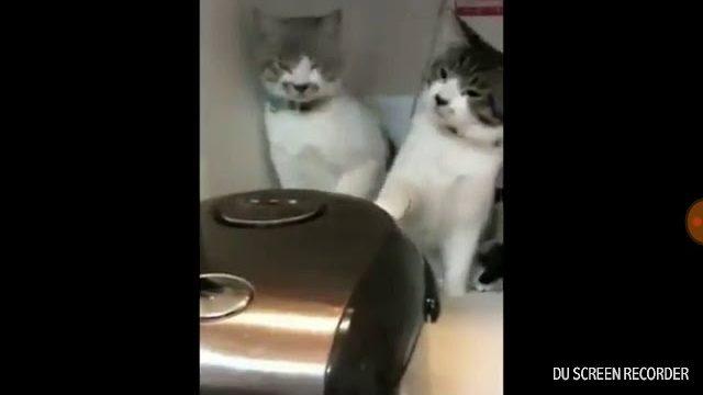 Śmieszne koty  \/  zolza
