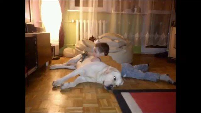 Śmieszne zdjecia z dziećmi i psami