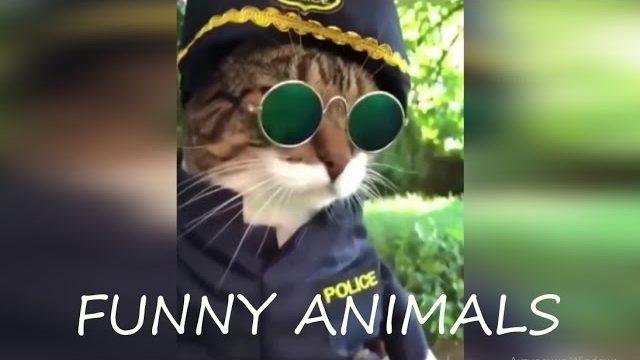 Śmieszne zwierzęta 2018  Spróbuj się nie zaśmiać