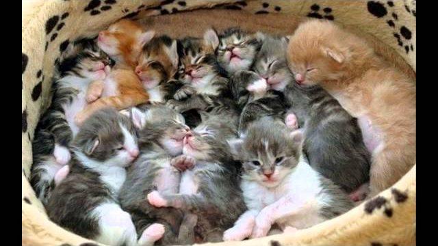 Śmieszne zwierzęta, koty, psy……