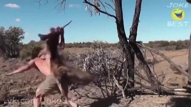 Zwierzęta śmieszne. Kompilacja HD. Śmieszne Filmiki.