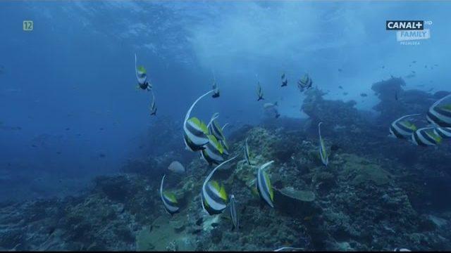 Podwodne Cuda Afryki odc.5 Mozambik